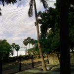 Coconut Tree Safety Nets in Chennai