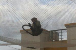 Monkey Safety Nets in Chennai