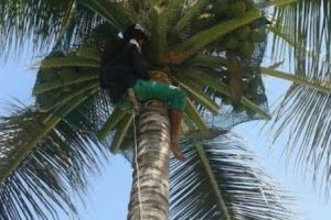 Coconut Fall Safety Nets in Chennai