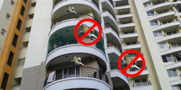 Birds Safety nets in Chennai