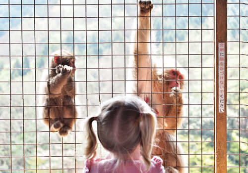 kyoto-kids-monkey-park-1